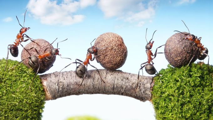 Ameisen rollen Stein